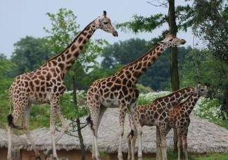 WILDLANDS Adventure Zoo Emmen3