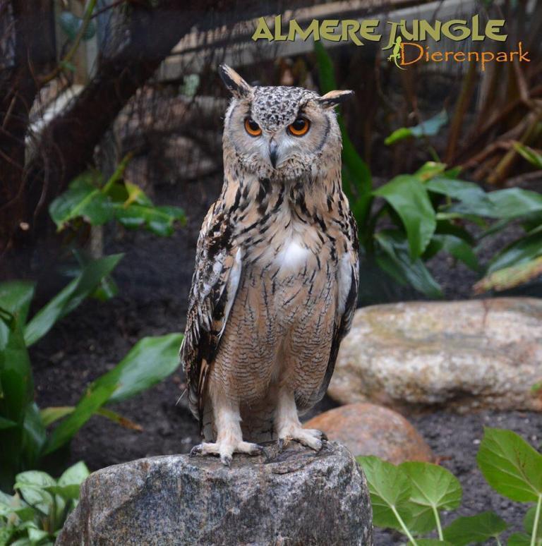 Almere Jungle Dierenpark (12)