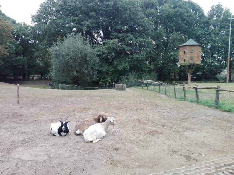 Kinderboerderij Hagerhof (4)
